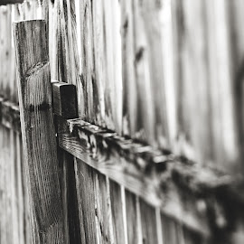 Holding it all Together by Rob Heber - Artistic Objects Other Objects ( wood fence, natural light, old, detail, sepia, monochrome, yard, wood, black and white, still life, sepia toned, rusty, shallow depth of field, weathered, picket fence, no people, weathered wood, fence post, rust, closeup, wood grain, texture, vanishing perspective, close up, boards, fence, focus on foreground, slats, outdoors, wooden fence, selective focus, nails, outside )