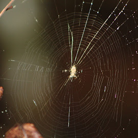 Just Beautiful by Julianna Holm - Nature Up Close Webs