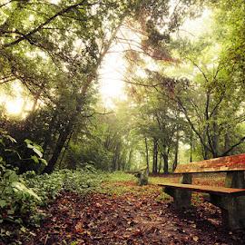 20180915_DSC_6503 by Zsolt Zsigmond - City,  Street & Park  City Parks ( forest, bench, light, autumn, trees )