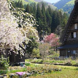 by Richard Esveld - Landscapes Travel ( beautiful shiragawa-go, japan )