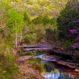 Sweet Spot by Michael Buffington - Landscapes Forests ( stream, colorful, green, forest, yellow, ozarks, landscape, spring, environment, redbud, nature, blue, lee creek, creek, brown, sycamore, natural )
