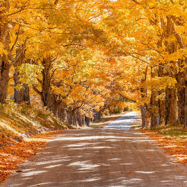 Maple Road by David Long - Landscapes Travel ( maple road, vermont, mount holly )