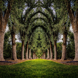 Liberty Park by Brandon Montrone - Digital Art Places ( abstract, reflection, park, grass, art, fine art, landscape, mirror, trunk, nature, tree, miirimage, digital art, trees, symmetry, landscapes, fractal )