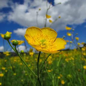 flower by Lidija P - Nature Up Close Flowers - 2011-2013