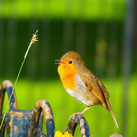 by Eleanor McCabe - Animals Birds