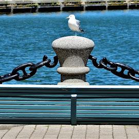 Lake Erie by Lauren Ann - City,  Street & Park  City Parks ( seagull, bench, lake,  )