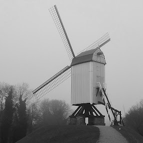 Windmill in Bruges by John  Pemberton - Buildings & Architecture Public & Historical ( leading lines, park, black and white, fog, windmill,  )