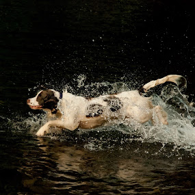 by Hannah Rugg - Animals - Dogs Running
