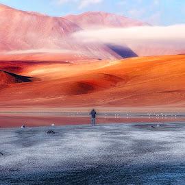 Vision by André Figueiredo - Landscapes Deserts (  )