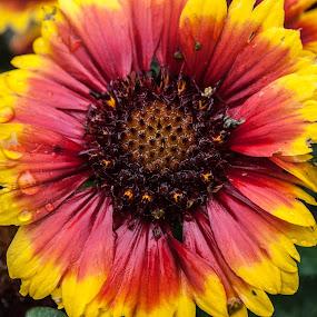 color burst by Tim Hauser - Nature Up Close Flowers - 2011-2013 ( nature, art, fine art, plants, flower )