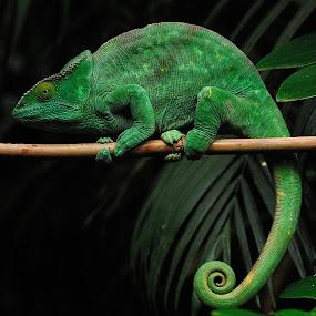 by Vladymyr Sergeev - Animals Reptiles
