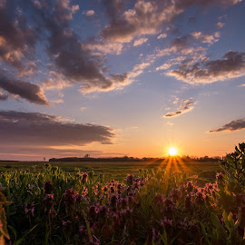 by Cornelius D - Landscapes Prairies, Meadows & Fields