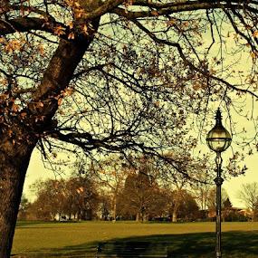 by Filio Starova - City,  Street & Park  City Parks