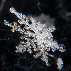 Snowflake on touque by Kevin Adams - Nature Up Close Water