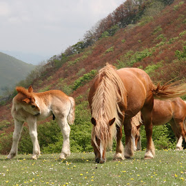 Sibian horses by Ian Turnell - Animals Horses ( #horses#wild#landscape#animals#colors )