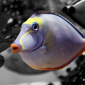 by Caro Amtmann - Animals Fish