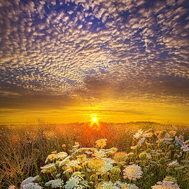Your Whisper Tells A Secret by Phil Koch - Landscapes Sunsets & Sunrises ( vertical, travel, yellow, love, sky, nature, weather, light, trending, colors, twilight, art, mood, journey, horizon, portrait, country, dawn, environment, season, serene, outdoors, lines, natural, hope, inspirational, wisconsin, ray, joy, landscape, sun, photography, life, emotions, dramatic, horizons, inspired, clouds, office, heaven, beautiful, scenic, living, morning, field, unity, blue, sunset, peace, meadow, summer, beam, sunrise, earth )
