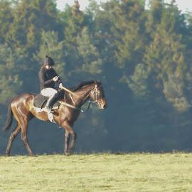 Multitasker by Annette Reddy-Keating - Animals Horses
