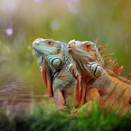 IGUANA by Yan Hidayat  - Digital Art Animals