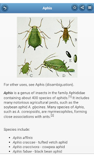 Aphids - screenshot