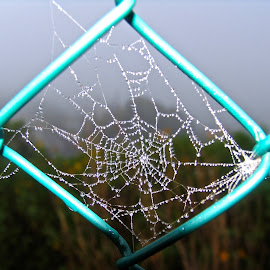 by Chrissy Almaraz - Nature Up Close Webs