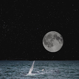 Whale in the night  by Alex  Wolf - Animals Fish ( cool, reflection, alex wolf, wolfproduction.us, florida, mooon, night, whale )