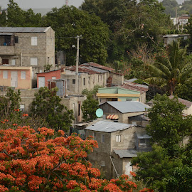 Dominican Village by Robert Coffey - Buildings & Architecture Homes ( dominican republic, buildings, homes, village, trees, los guandules )