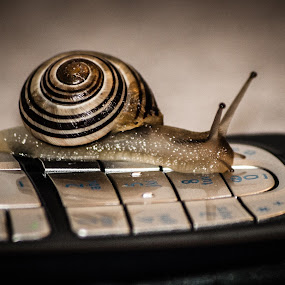 Slow Call by Even Steven - Animals Other ( call, old, numbers, vintage, communication, cellphone, keypad, slug, slow, snail )
