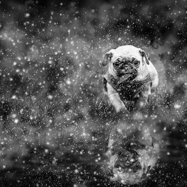 Reflection of a small beast by Malcolm Hare - Animals - Dogs Puppies (  )