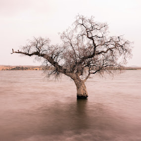 by Ricardo Figueirido - Landscapes Waterscapes