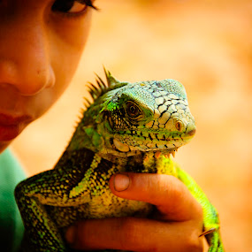 A lizzard's life by Hirian Raul - Animals Reptiles ( face, lizzard, green, eyes )