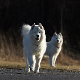 by Kym George - Animals - Dogs Playing
