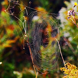 by  Jeff Hunking - Nature Up Close Webs