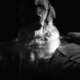 Zeus  by Tom Merring - Black & White Animals ( dogs )
