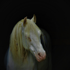 Old Horse. by Hal Gonzales - Animals Horses ( barn, waiting, horse, standing, solid background,  )