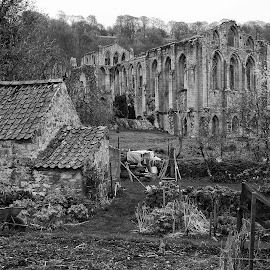 Rievaulx Abbey by Marc Downing - Buildings & Architecture Public & Historical ( england, yorkshire, ruin, rievaulx, abbey )