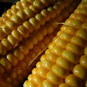 Maize cobs by Pradeep Kumar - Food & Drink Fruits & Vegetables