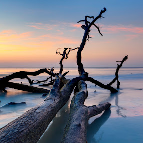 driftwood by John Wollwerth - Landscapes Waterscapes ( nobody, colorful, waterscape, silhouette, time exposure, ocean, flow, atlantic, landscape, driftwood, nature, tree, tide, copy, water, orange, hdr, sea, horizon, south carolina, blue, sunset, sunrise, natural, room )