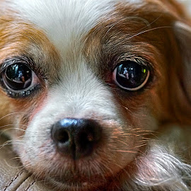 our beloved dog by Tran Ngoc Phuc Ngoctiendesign - Animals - Dogs Portraits