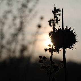 sunrise  by Sarath Goparaju - Landscapes Sunsets & Sunrises ( plant, abstract, nature, india, sunrise )