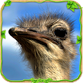 Free Download Furious Ostrich Simulator APK for Samsung
