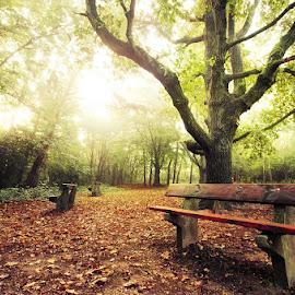 20180915_DSC_6499 by Zsolt Zsigmond - City,  Street & Park  City Parks ( bench, fall, light, autumn, trees, morning )