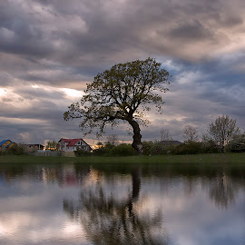 Beauty in nature by Marius Olbosan - Nature Up Close Trees & Bushes ( clouds, water, reflection, sky, nature, tree, outdoor, lake,  )