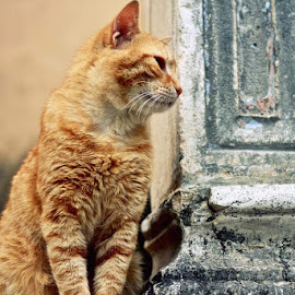 by Svjetlana Panic - Animals - Cats Portraits