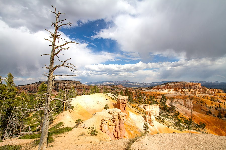 Bryce by Ron Meyers - Travel Locations Landmarks