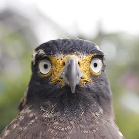 Yeah you,I'm lookin atchu! by Hansen Christian - Animals Birds ( bird, nature, pets, wildlife, travel )