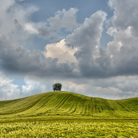 by Manuela Dedić - Landscapes Prairies, Meadows & Fields