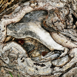 The Eye by Dawn Moder - Nature Up Close Other Natural Objects ( roots )