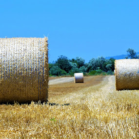 The three hay reels  by Svetlana Saenkova - Nature Up Close Other Natural Objects ( hay, 3, hay reels, three )