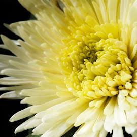 Bunga yang menenangkan by Alfian Budi - Instagram & Mobile Android